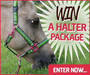 Win a Halter Square