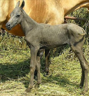 Have you Ever Seen a Hairless Horse?
