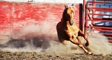Show Horse Gallery - Olenas King Texas